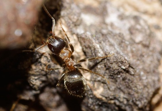 Mravce a mravec