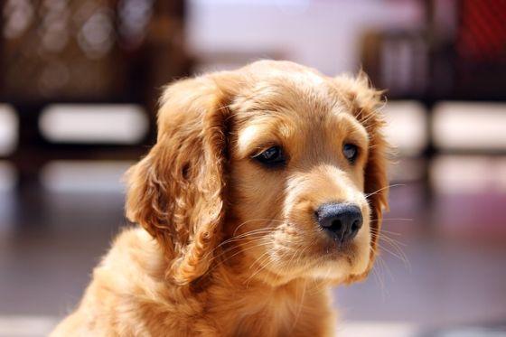 pes a šteniatko doma