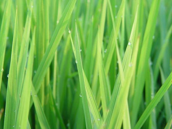 tráva trávnik