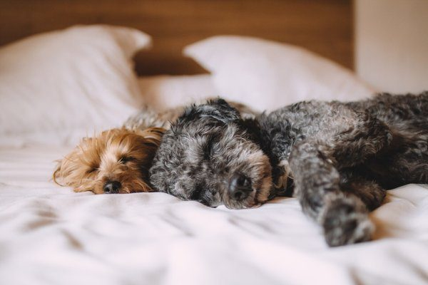 Pest a posteľ