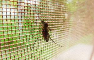 Komár a zabezpečenie sieťkou
