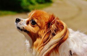 Pes a strach
