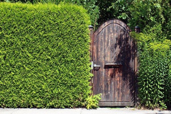 zelený živý plot