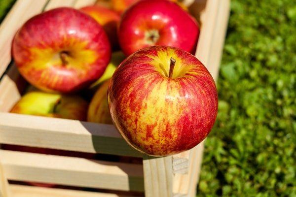 Jablká samozber jabĺk