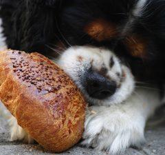 potraviny nie pre psa