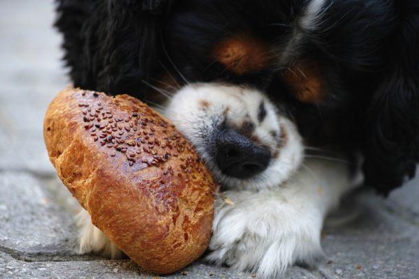 potraviny nevhodné pre psa