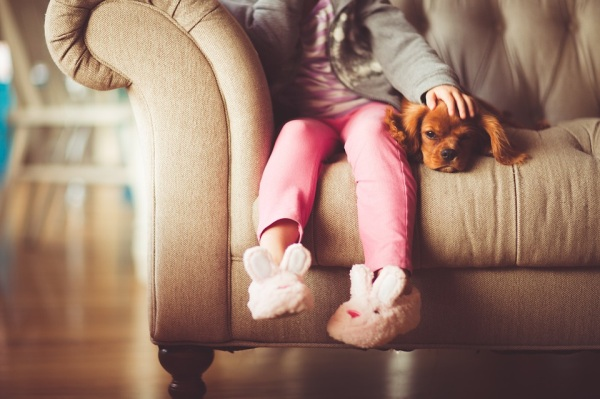 Pes doma