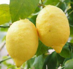 Citrón a citrónová kôra