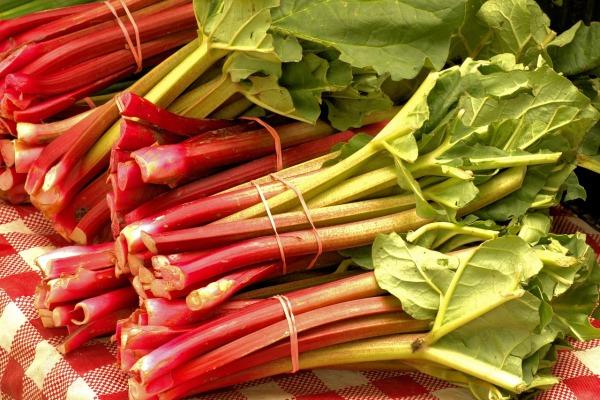 rebarbora listová zelenina