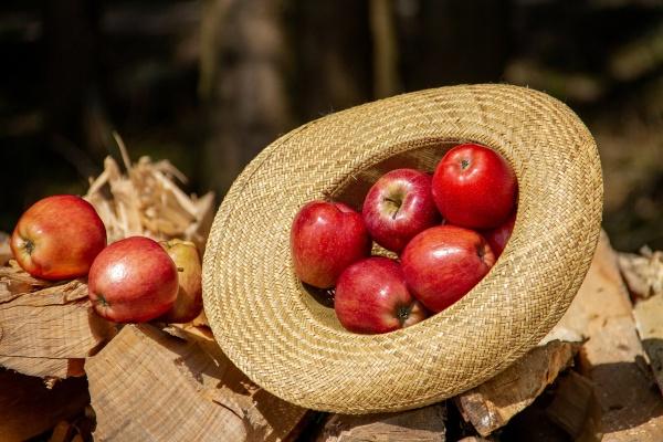 Samozber Jablká