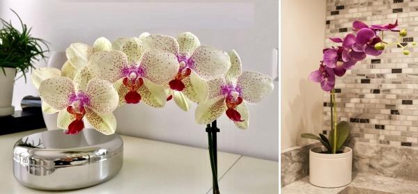 orchidea phalaenopsis kupelna