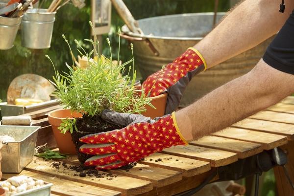záhradné rukavice Wolfgarten
