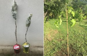 Zahradnici.sk hodnotenie recenzia