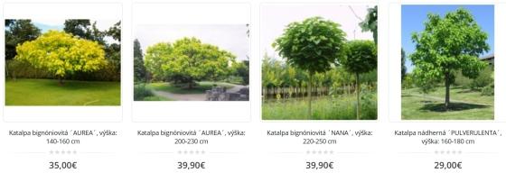 Katalpa, strom v ponuke predajcov online a ceny