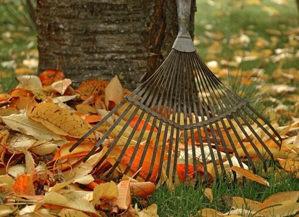 jesenná záhrada hrabanie lístia