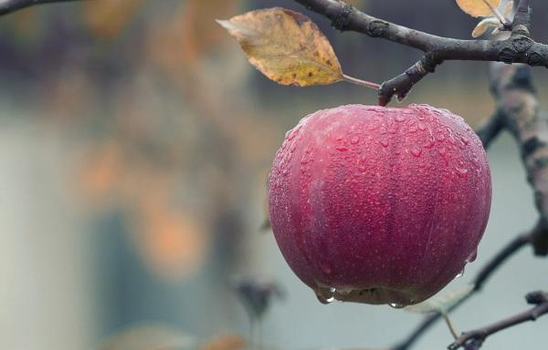jesenná záhrada jablčko