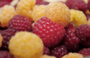 Malina, kombinácia červených a žltých malín