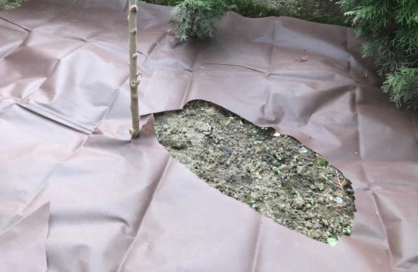 Predzáhradka bez pravidelnej údržby a kosenia, vysypaná štrkom a kôrou
