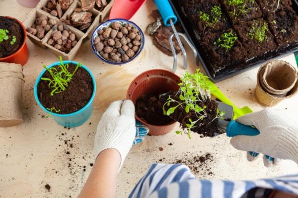 priesady a sadenie