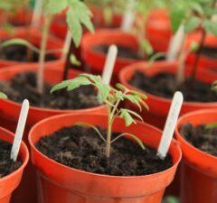 Planty a priesady