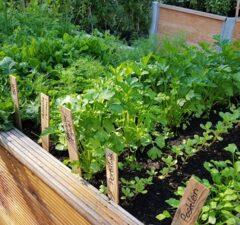znášanlivosť rastlín, záhradníčenie